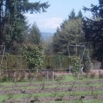 international rose test garden in portland oregon before bloom